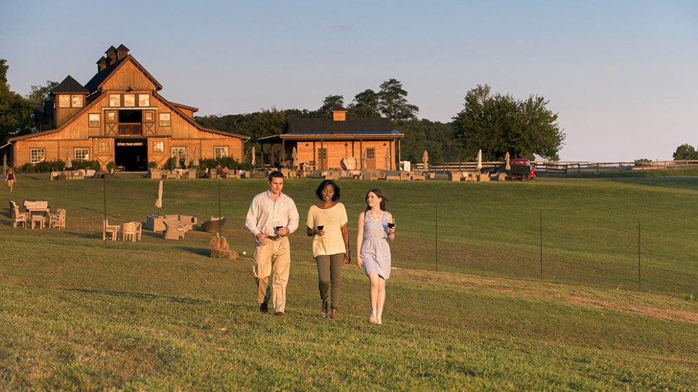 How to Spend a Day in Leesburg's Wine Country