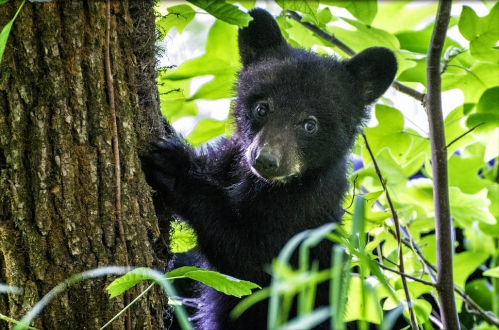 There Is a Bear in a Tree