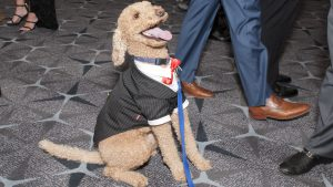 PHOTOS: The Best Dressed Pups at the Humane Rescue Alliance's Bark Ball
