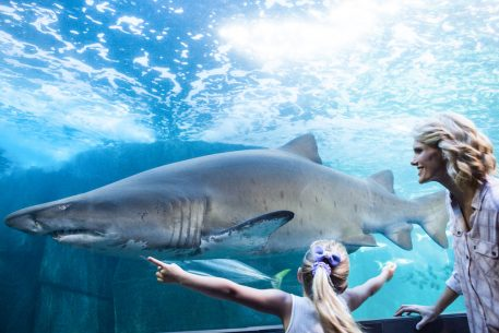 To Celebrate Shark Week: 6 Things to Do Around DC If Your Kid is Obsessed With Sharks