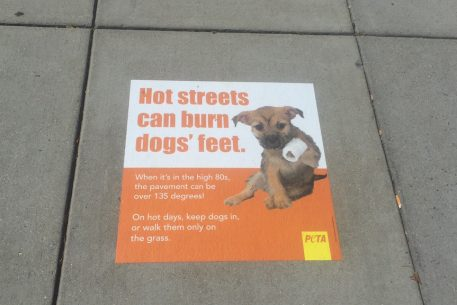 PETA is Using DC Sidewalks to Warn Against Walking Your Dog in the Middle of a Hot Day