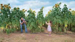 Frolic Through This Virginia Sunflower Field Before the Summer Ends