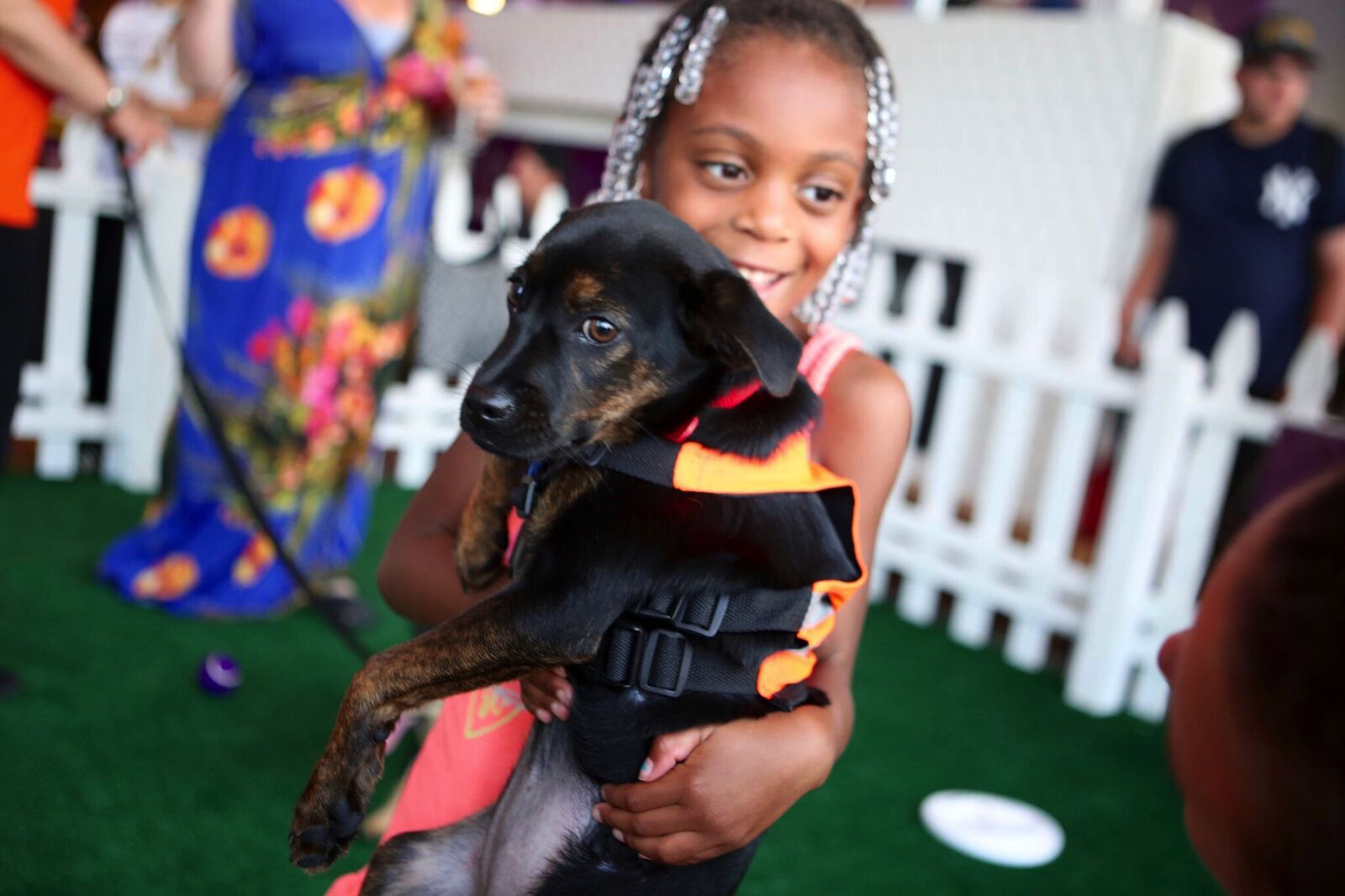 These Adorable Puppies Are Looking For Their Forever Homes