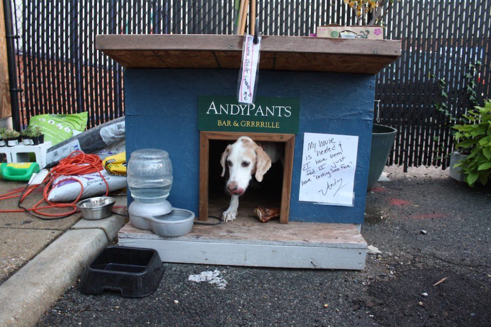 DC Health Department Cracks Down on Dogs on Bar and Restaurant Patios