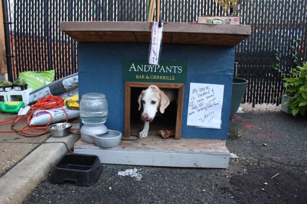 DC Council Passes Emergency Legislation To Allow Dogs On Restaurant And Bar  Patios