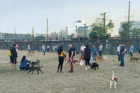 How 400 DC Neighbors Banded Together to Get Their Own Dog Park