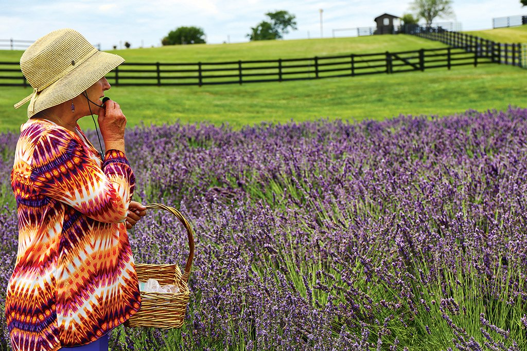 Enjoy a field of lavender in Harrisonburg. Photograph by Renee Sklarew.