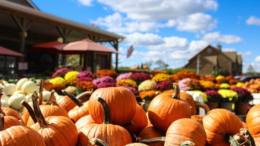 pick apples pumpkins dc