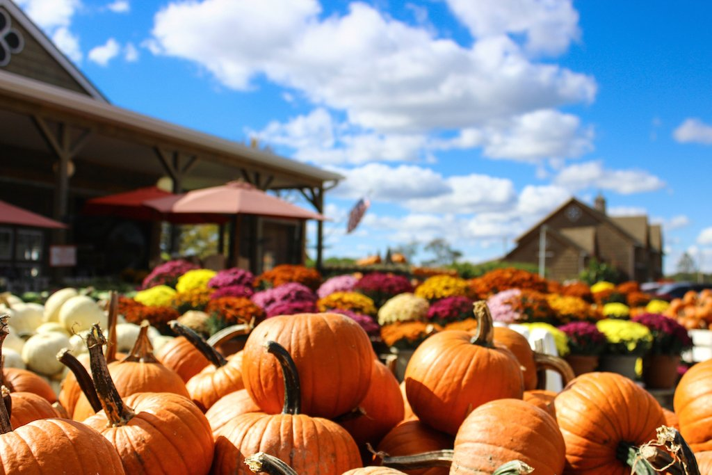 10 places to pick your own apples and pumpkins near dc washingtonian