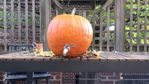 Make This Pumpkin Keg and Become a Halloween Legend