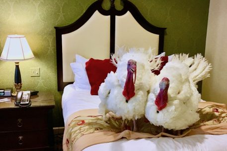 Presidential Turkeys Drumstick and Wishbone Receive Media Training, Love Classic Rock