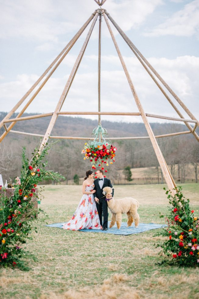 Technicolor Dream | Alpacas | Sarah Houston Photography255