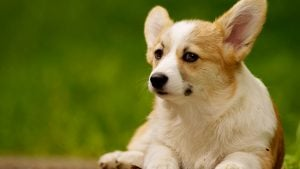 Last Chance! Submit Your Adorable Dog to Washingtonian's Cutest Dog Contest