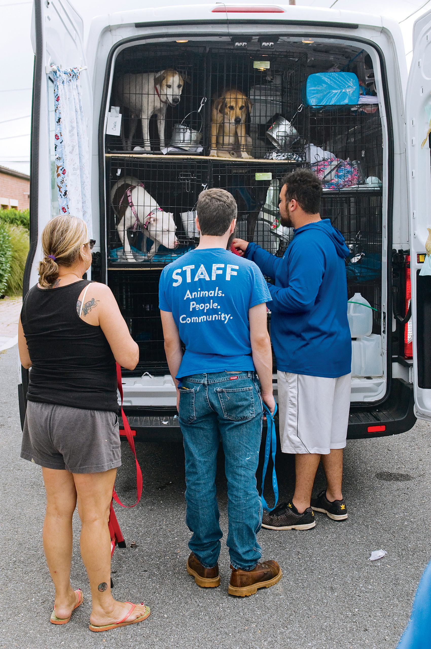 Homeward Hound: Dogs affected by Hurricane Harvey arrive at DC's Humane Rescue Alliance. Photograph courtesy of Humane Rescue Alliance