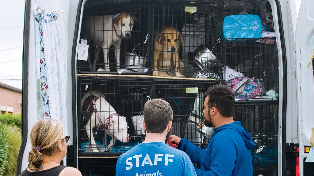 Homeward Hound: Dogs affected by Hurricane Harvey arrive at DC's Humane Rescue Alliance.