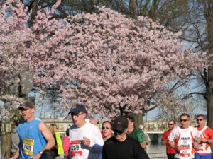 How To Train For The Cherry Blossom Ten-Mile Run In Six Weeks