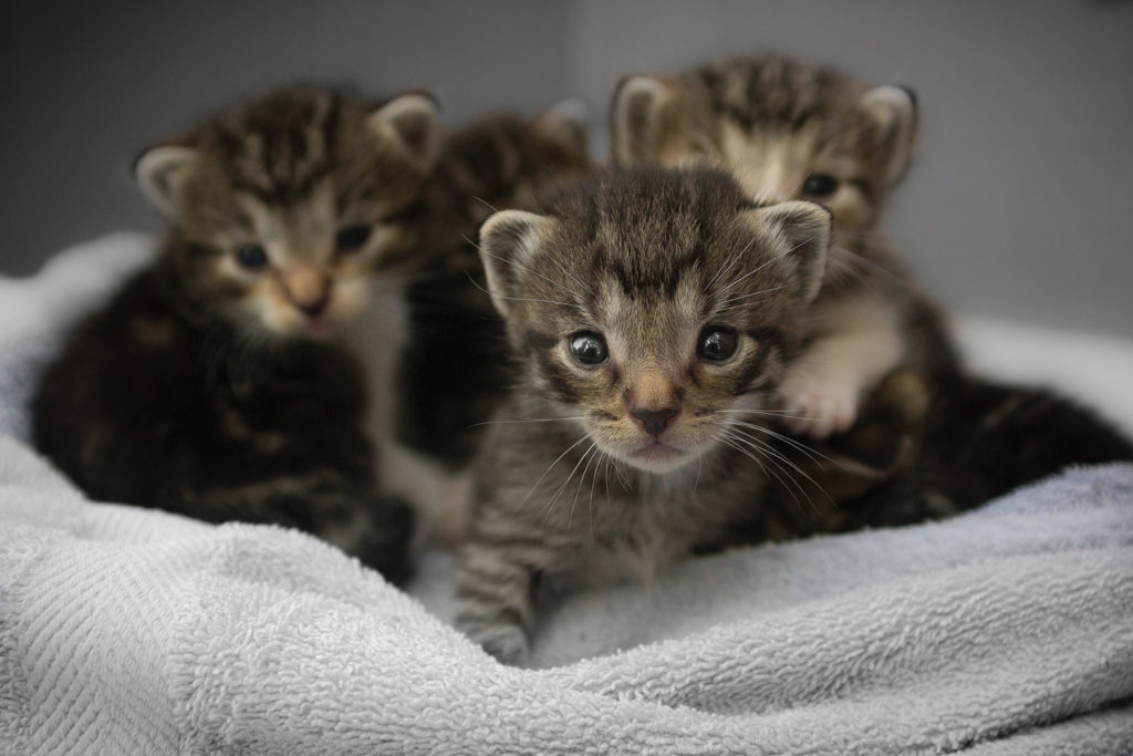Don't these kittens look like little cheetahs? Photograph by Q'Aila via Unsplash.