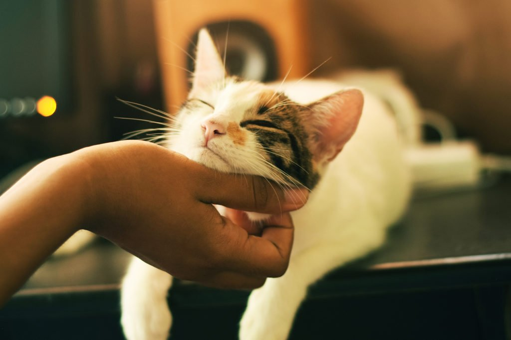 Who doesn't love a chin rub? Photograph by Yerlin Matu via Unsplash.