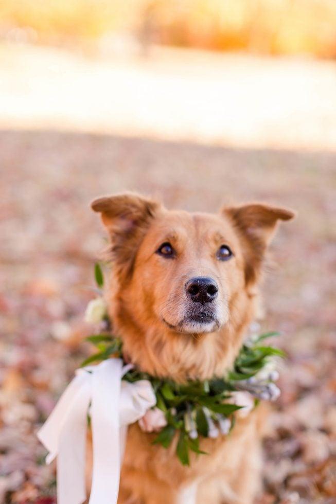Rescue Puppies BARCS Baltimore Bloggers 17