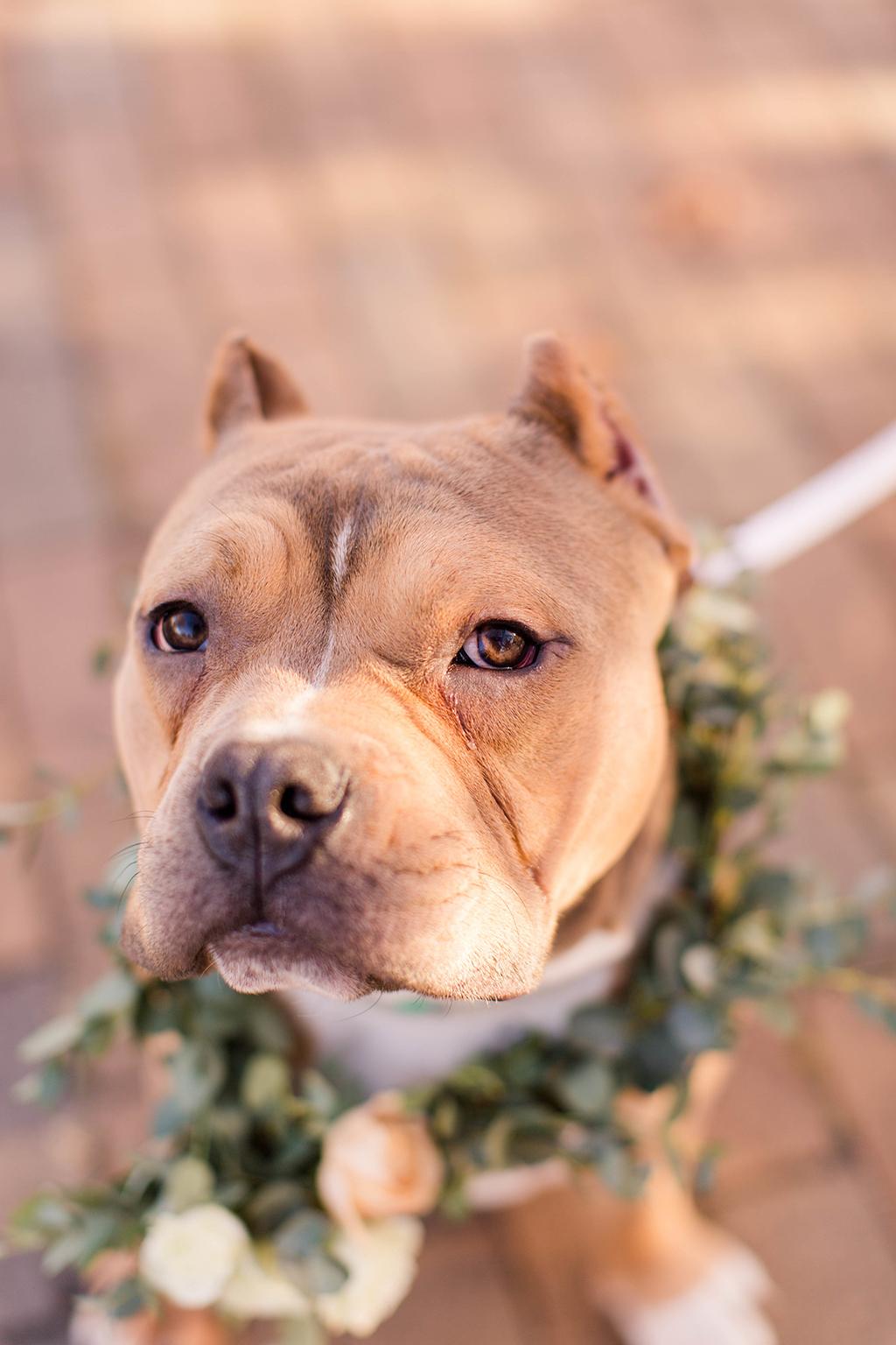 Rescue Puppies BARCS Baltimore Bloggers 2