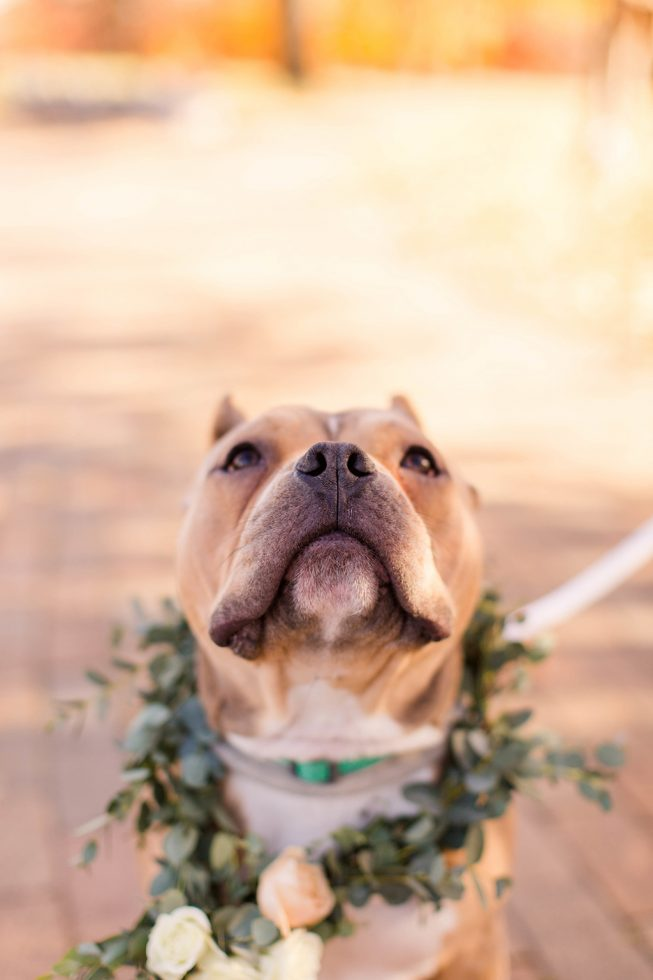 Rescue Puppies BARCS Baltimore Bloggers 6