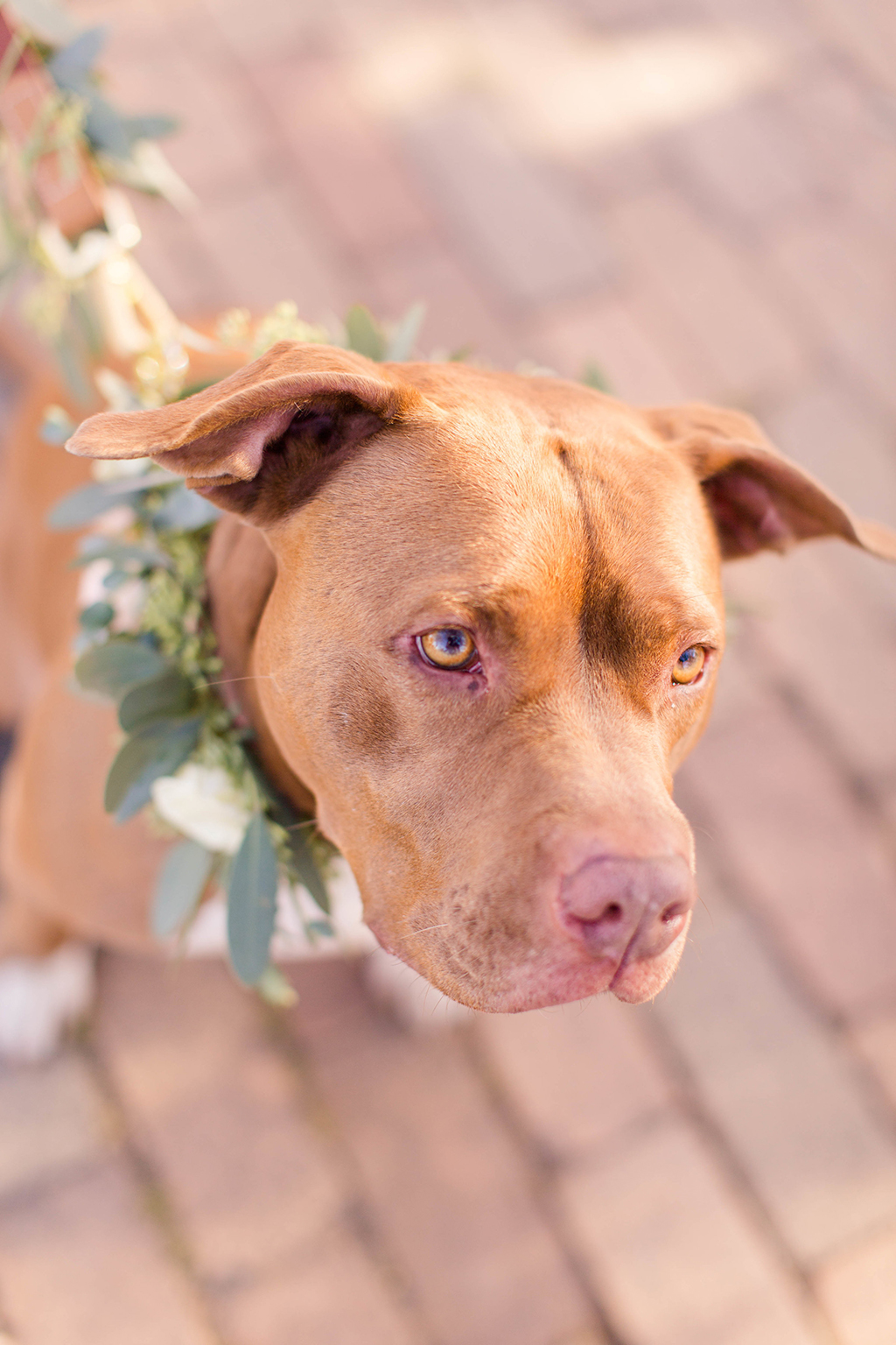 Rescue Puppies BARCS Baltimore Bloggers 9