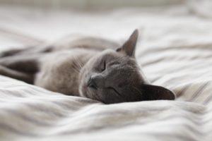 Enter Our Cutest Cat Contest!