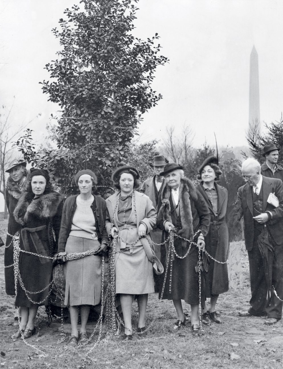 The Surprisingly Calamitous History of DC's Cherry Blossoms