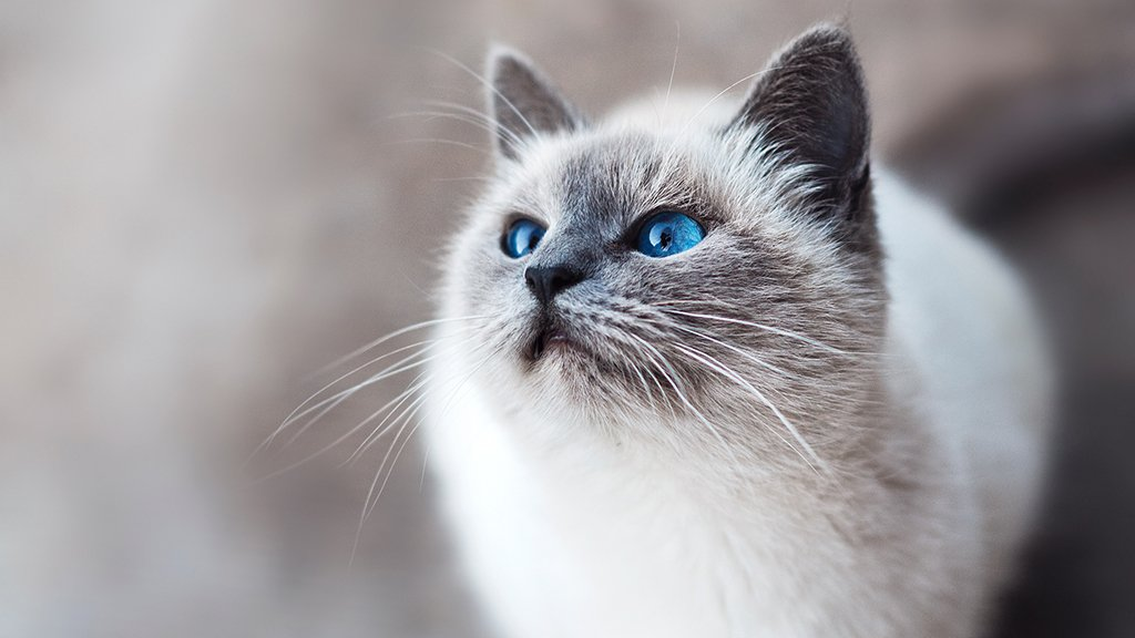 Who could resist these blue eyes? Photo by Mikhail Vasilyev on Unsplash.