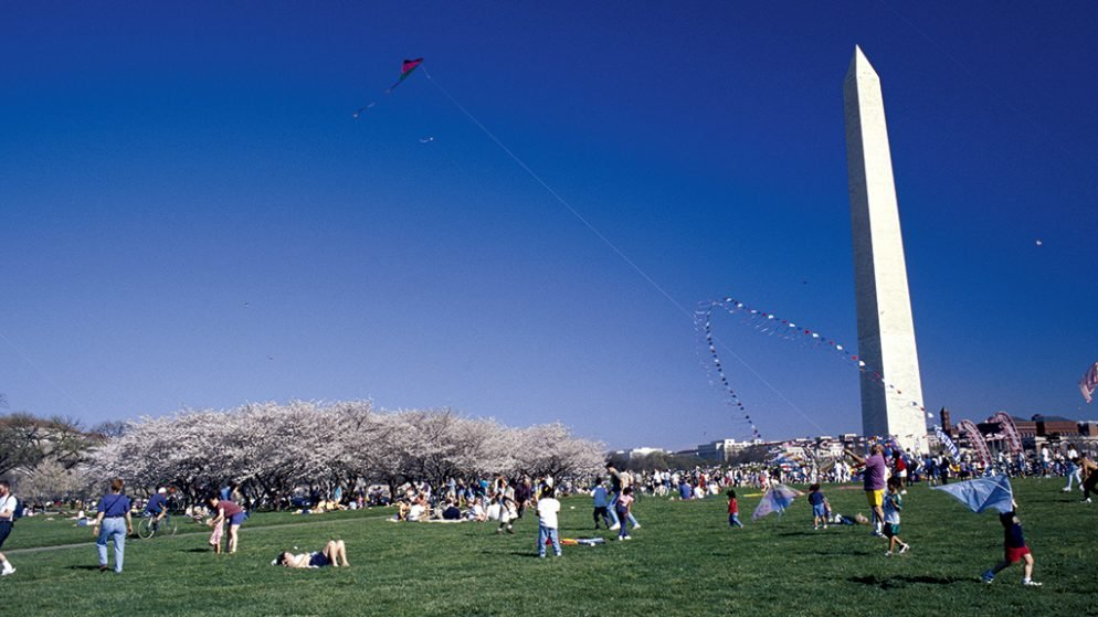 The 6 Best Cherry-Blossom Events in DC