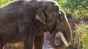 Florida Elephant Comes to DC in Search of Love