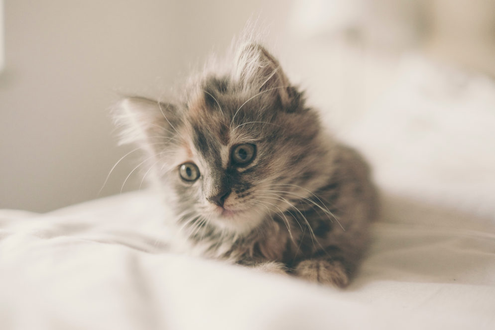 Voting Is Now Open for Washingtonian's Cutest Cat Contest!
