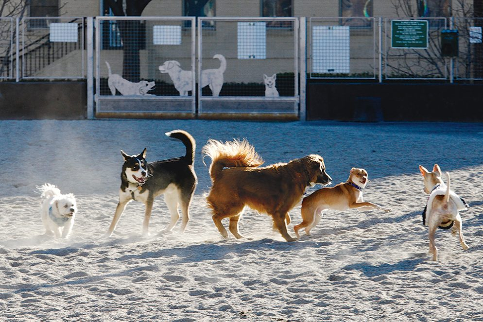Five great dog parks in arlington solutioingenieria Image collections