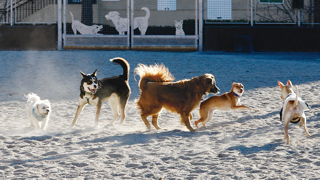 James Hunter dog park. Photograph by Evy Mages.