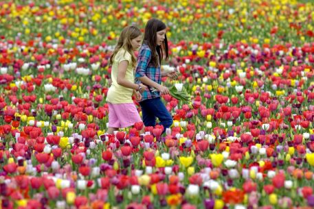 This Virginia Farm Will Have Thousands of Tulips in Bloom This Weekend