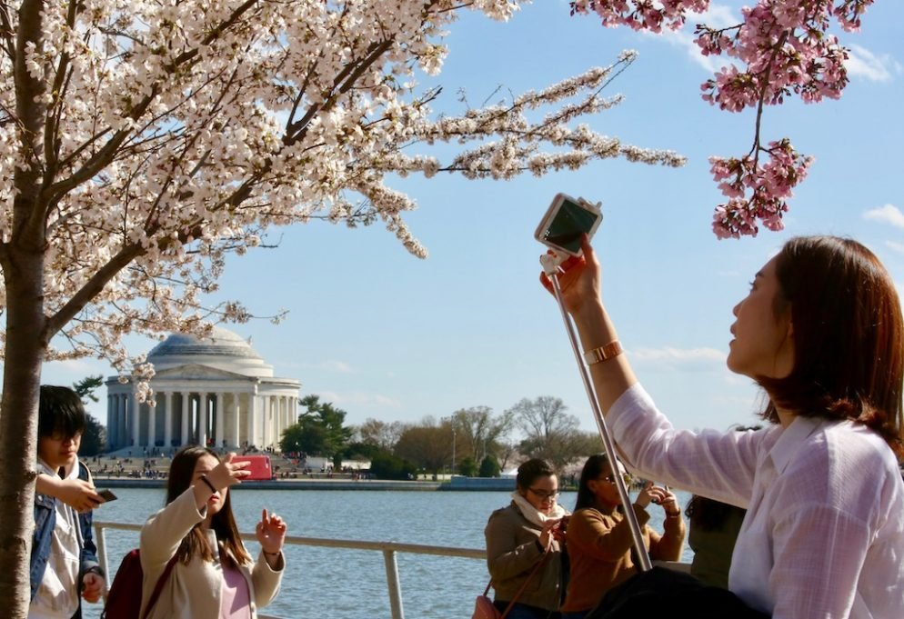PHOTOS: DC's Cherry Blossoms Bring Out the Photographers