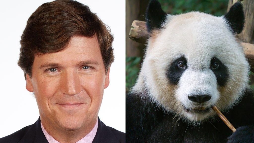 Tucker Carlson pandas