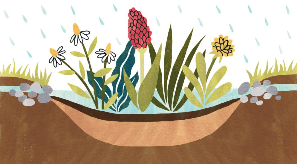 Eight Ways to Make Your Yard More Environmentally Friendly