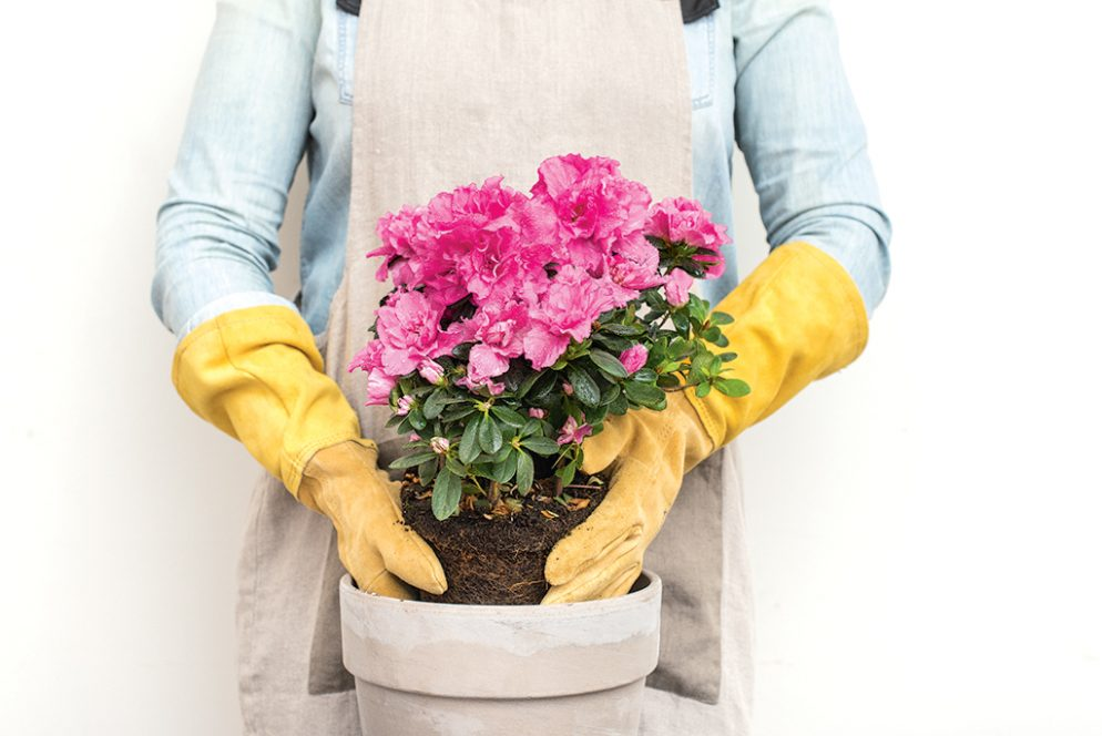 Get Ahead of Mother's Day Gifting With These Surprisingly Chic Gardening Tools