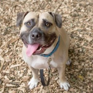 The Humane Rescue Alliance Will Waive All Adoption Fees This Weekend