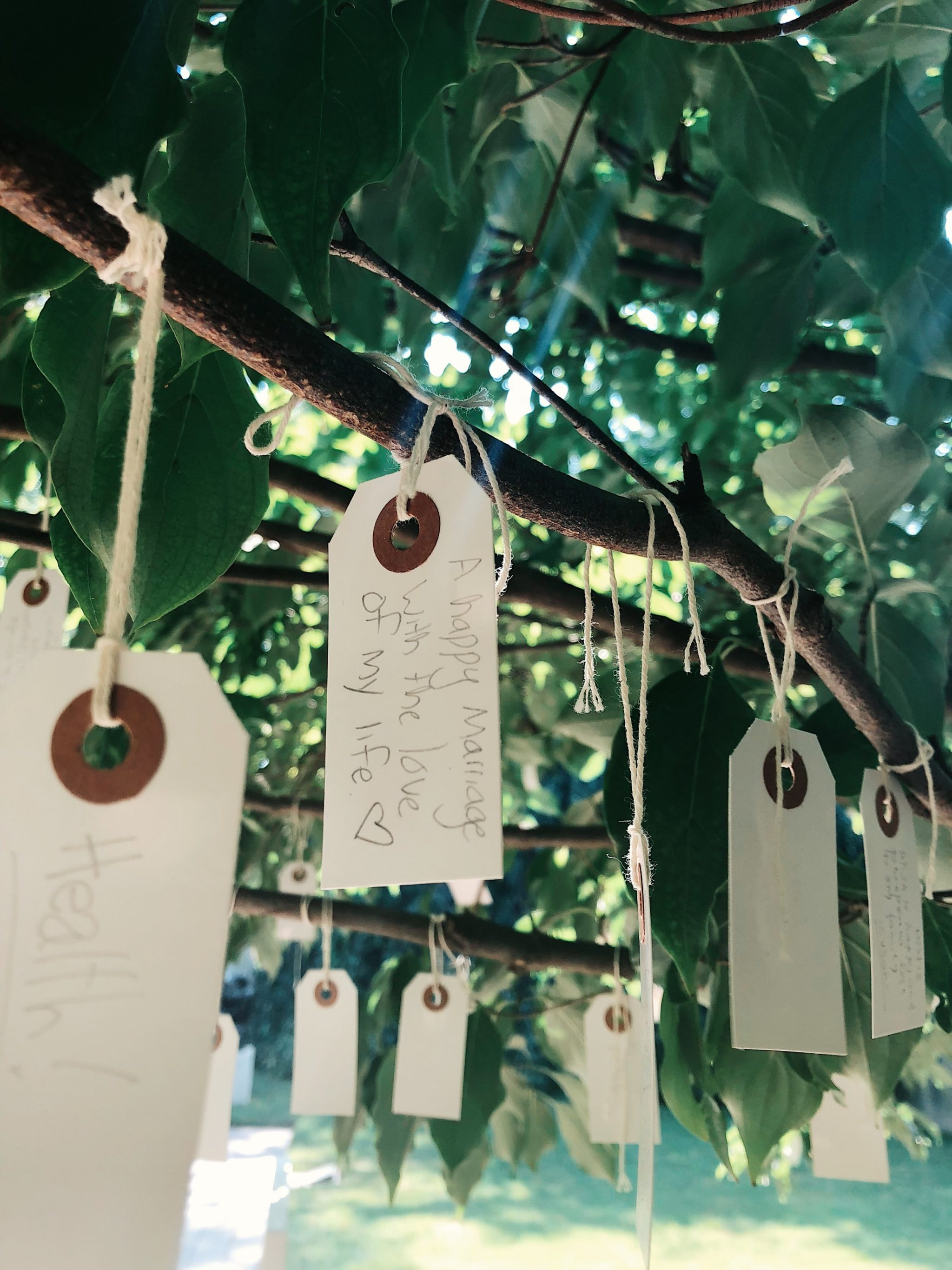 Hirshhorn Wish Tree