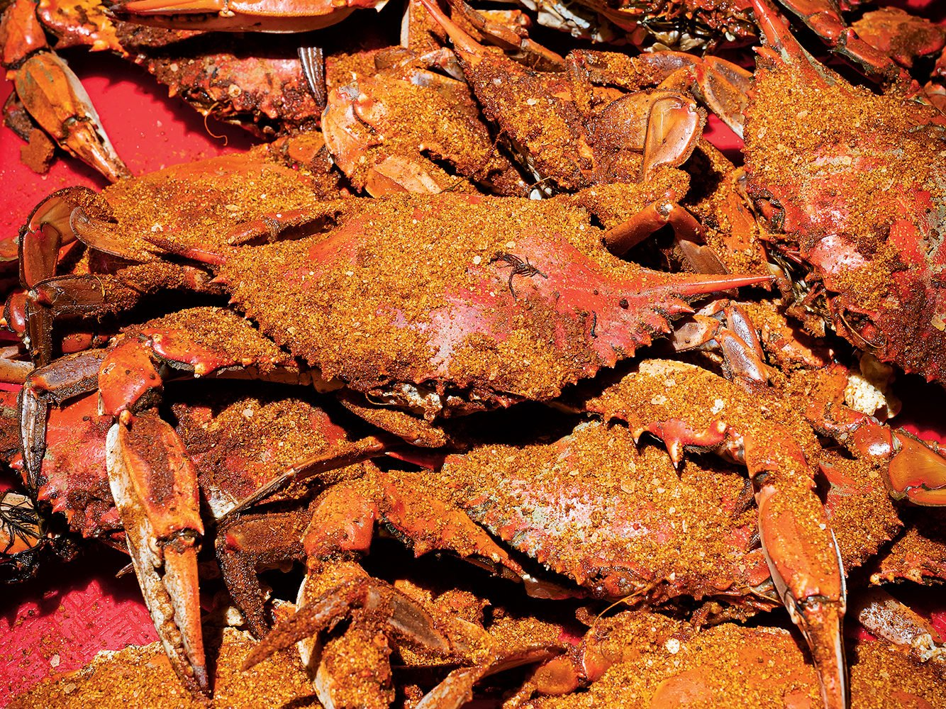 Crabs at the Point. Photograph by Scott Suchman.