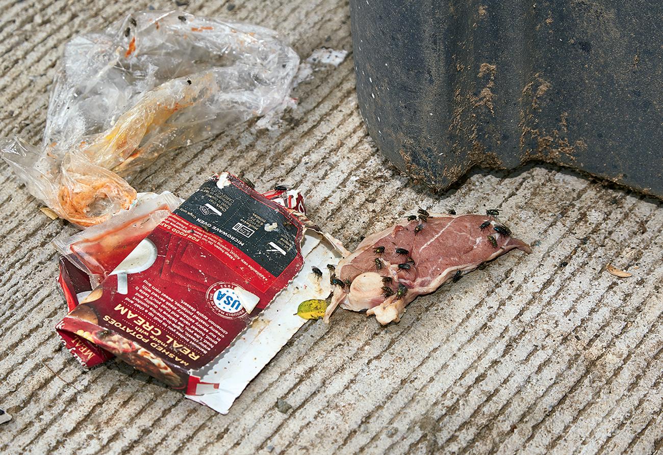 Rats love trash.
