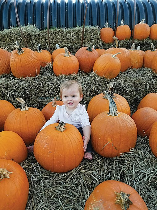 Pick your own pumpkin on the Loudoun County Farm Tour.