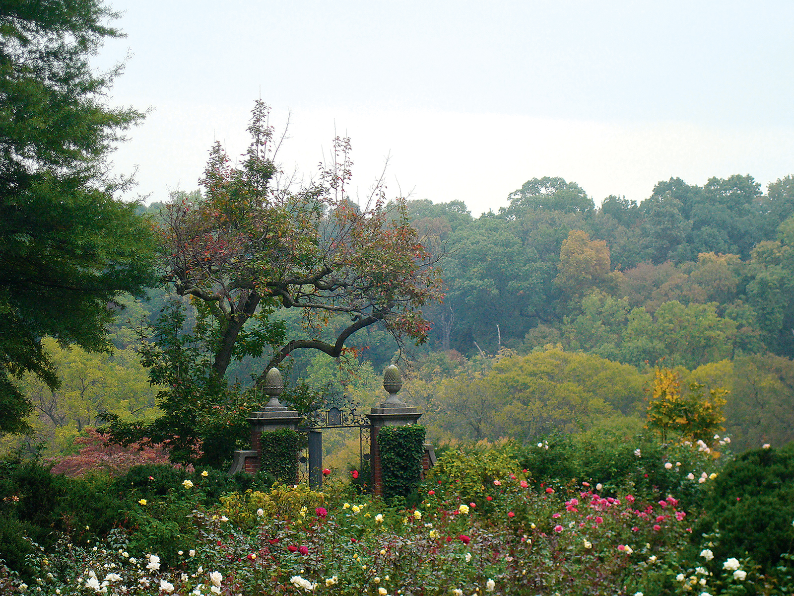 You can wander the gardens at Dumbarton Oaks year-round. Photograph Courtesy of Dumbarton Oaks.