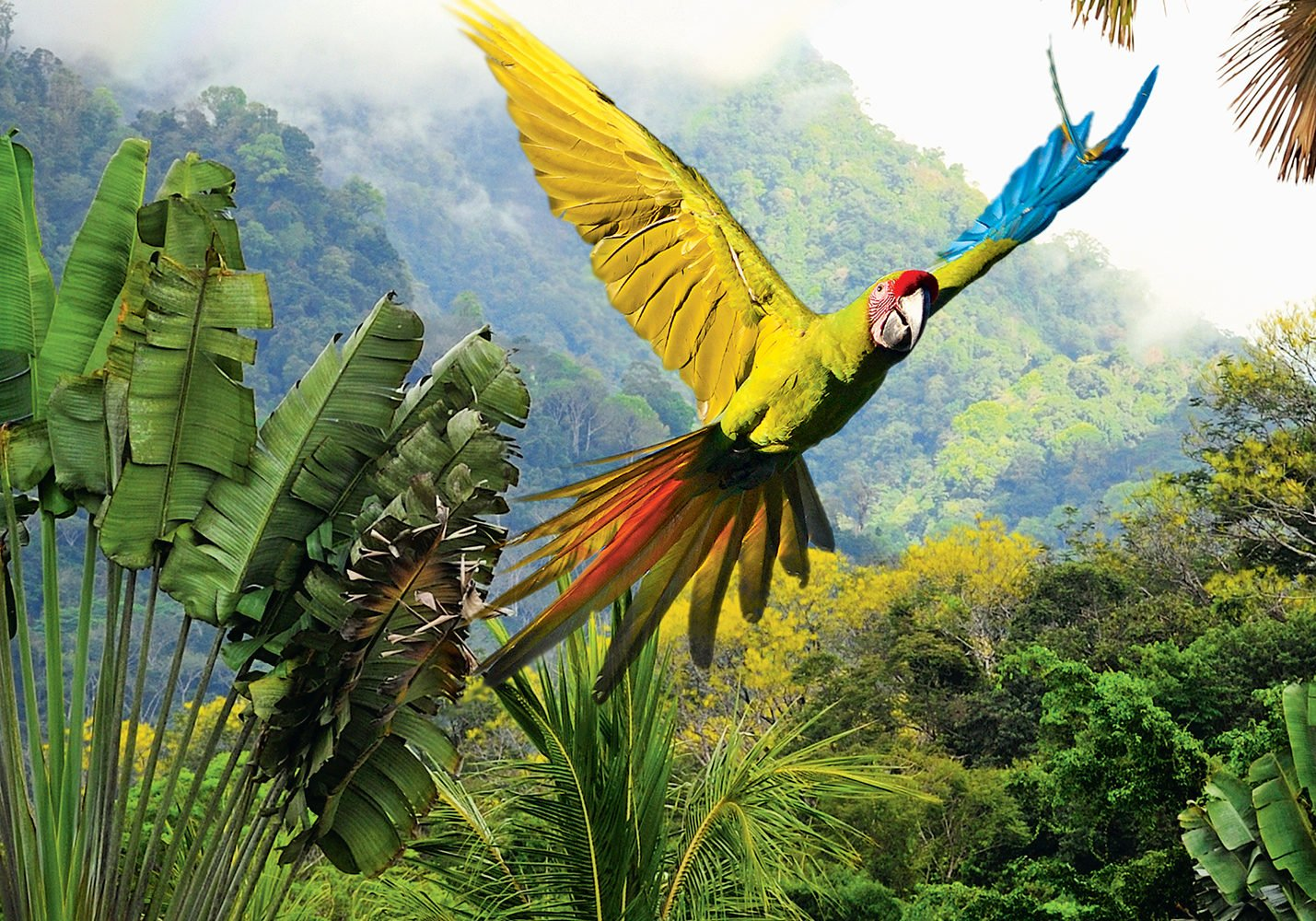 Nature is anything but reserved in Costa Rica.