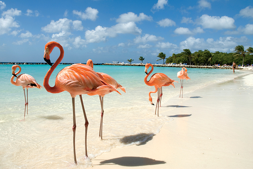 Hurricane-free Aruba is a safe tropical place to flock to in fall.