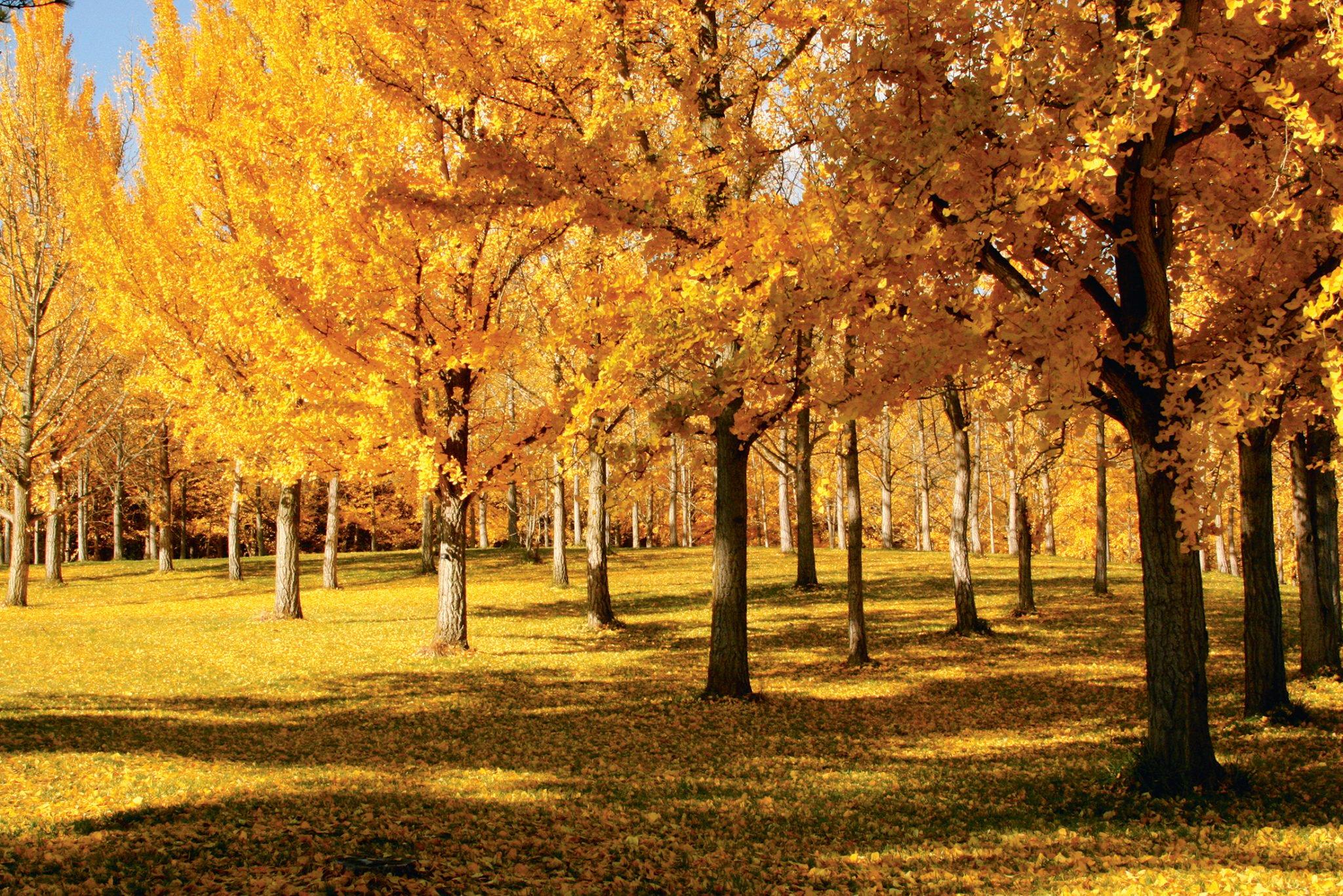 Fall Foliage in DC. Photograph by Tim Farmer/Blandy Experimental Farm.