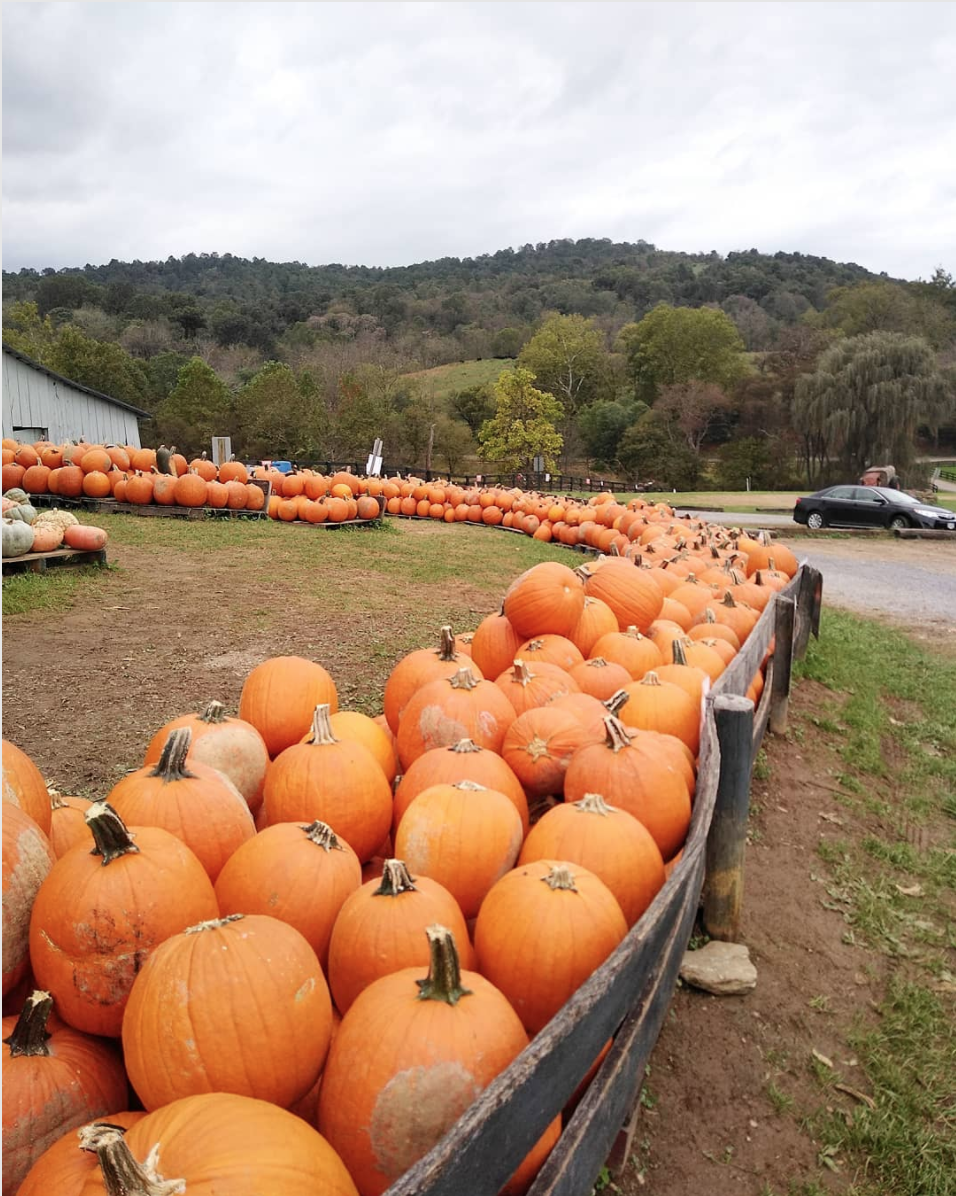 10 spots to pick your own apples and pumpkins near dc now that it