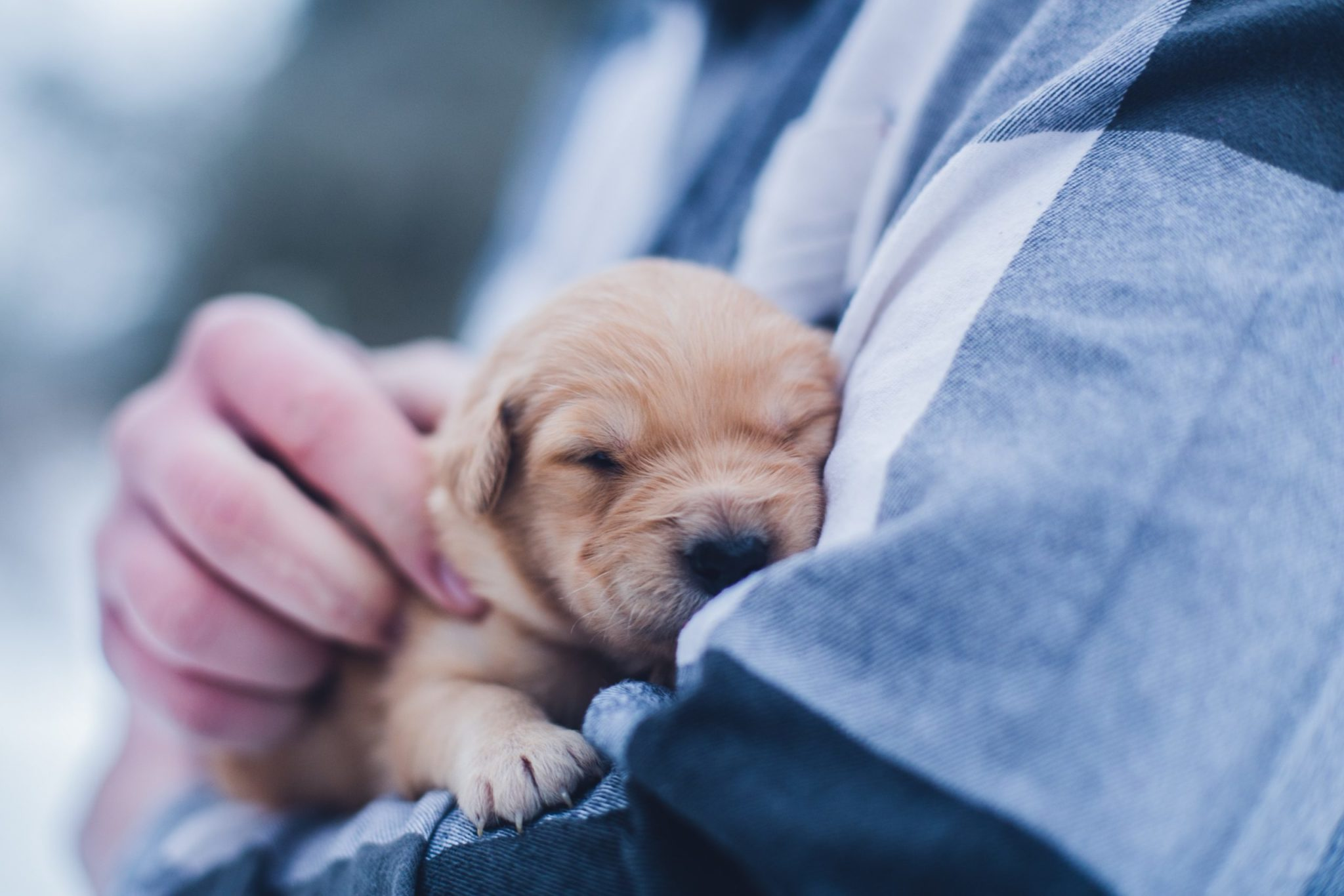 Washingtonian's Cutest Dog Contest: Just taking a little snooze. Photograph by Lydia Torrey via Unsplash.